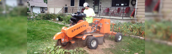 Remi's Stump Grinding Service Appleton wi