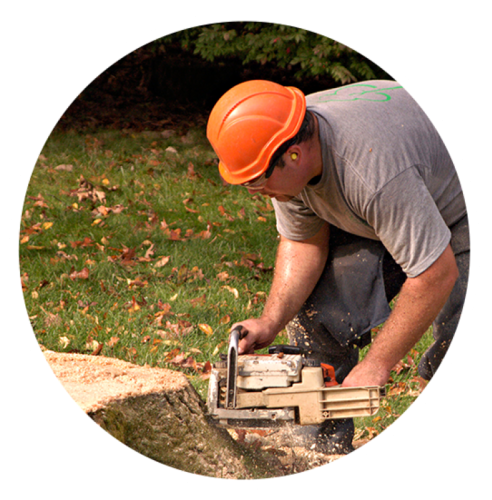 Appleton Tree Stump Grinding and Removal